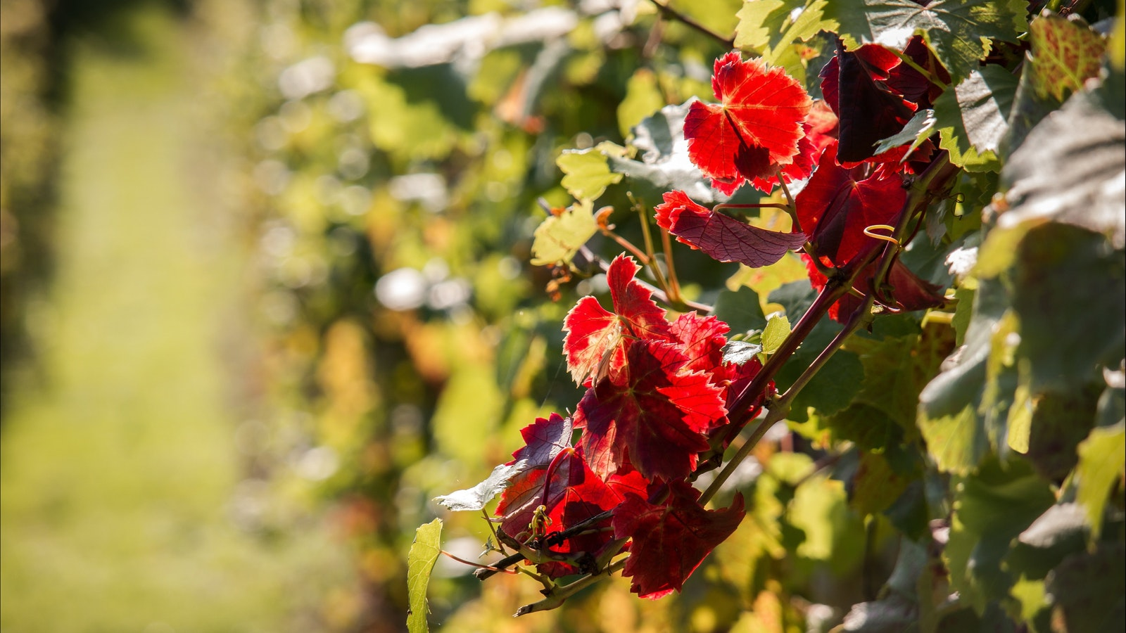 Experience some of the best wines in Australia