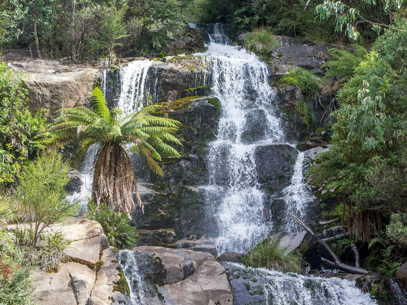 A waterfall with a large  tree fern in front