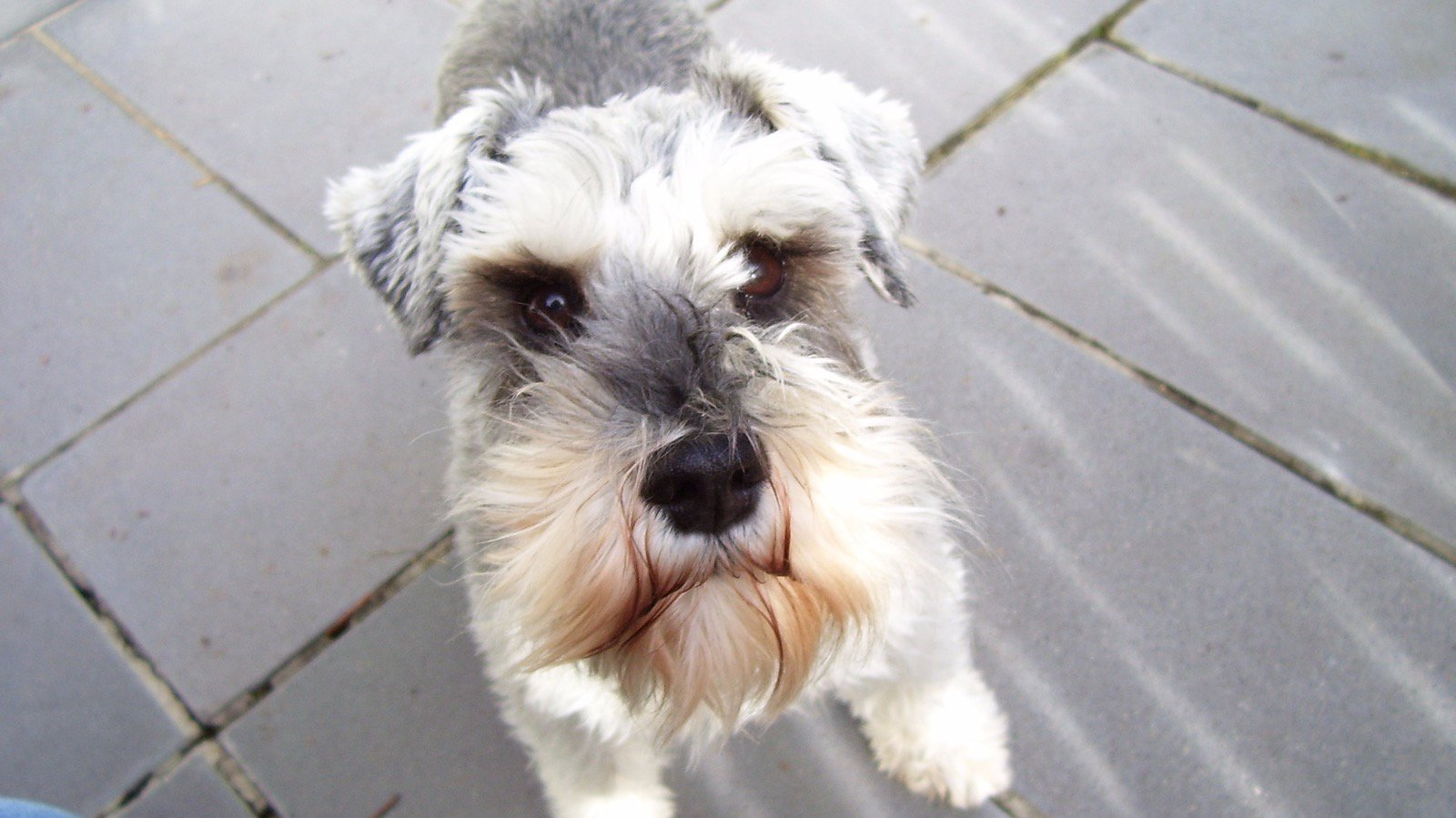 Pet Friendly accommodation, dog walking and minding can be arranged