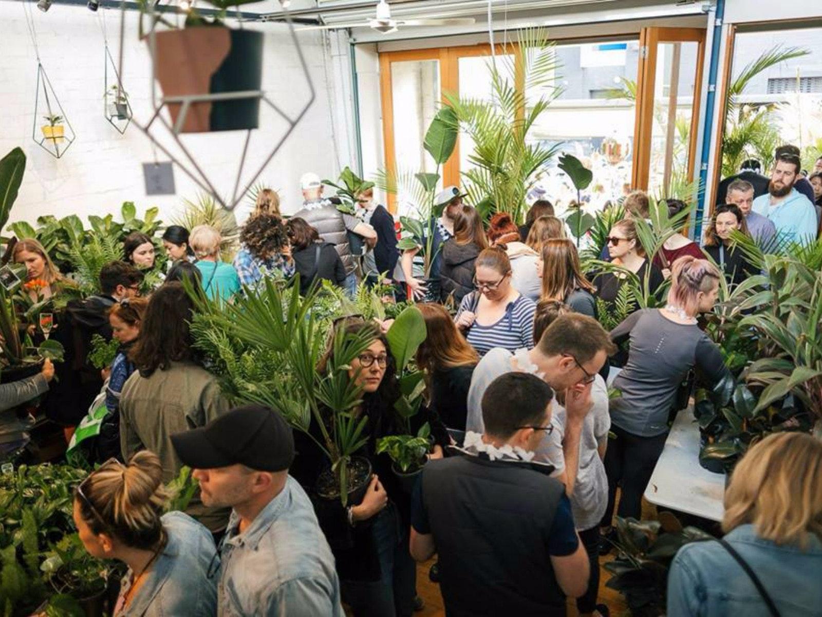 Indoor Plant Warehouse Sale