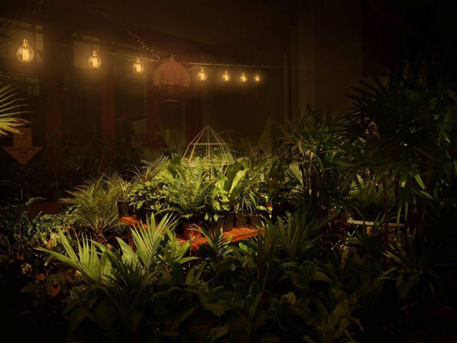 Twilight Indoor Plant Warehouse Sale