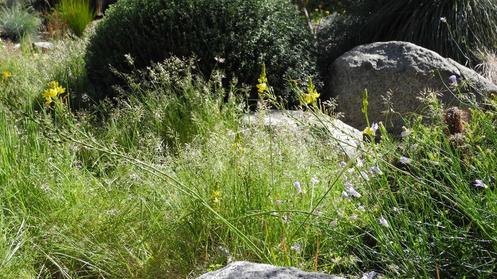 Kilsyth Garden
