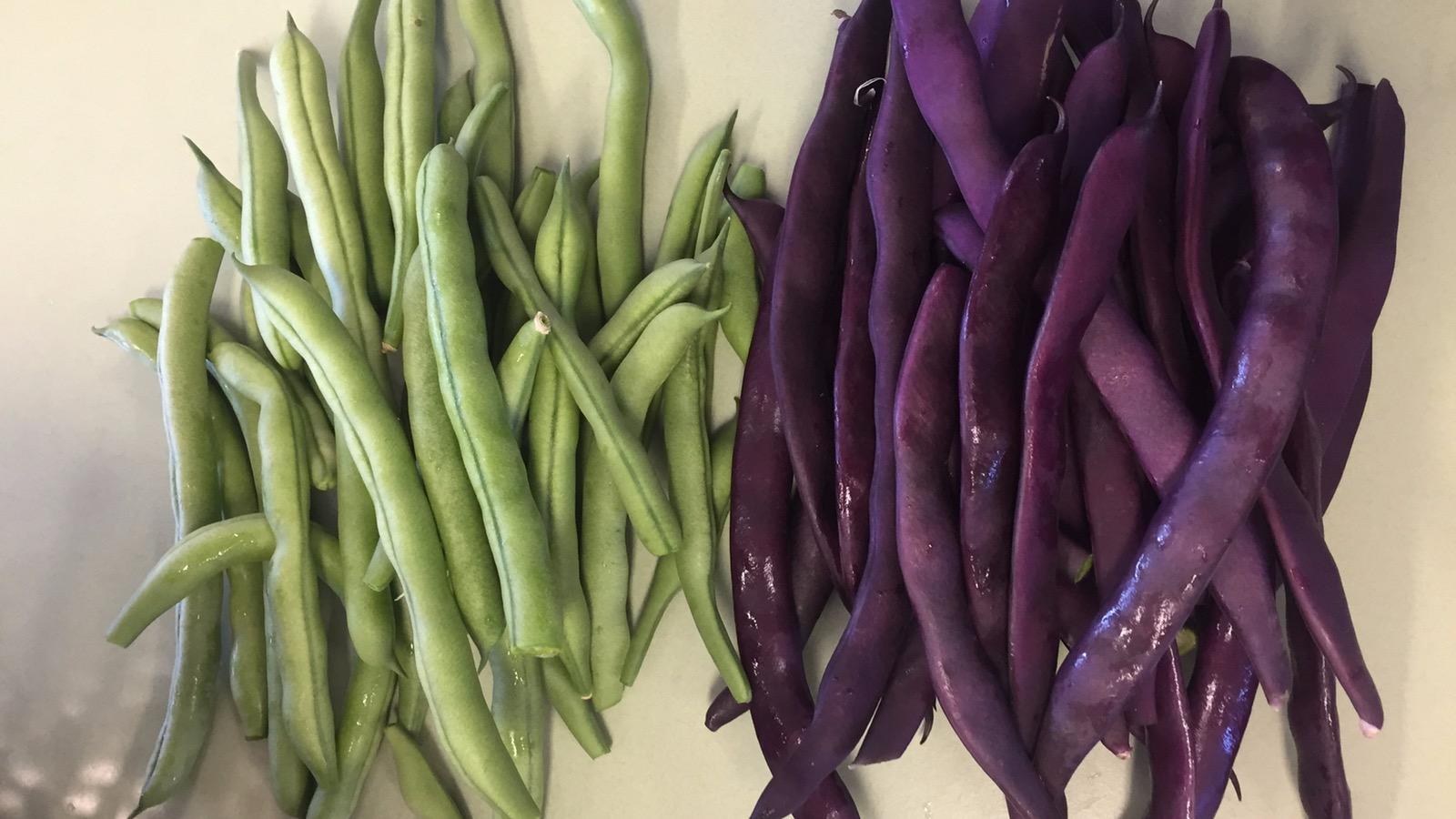 Freshly picked kitchen garden beans