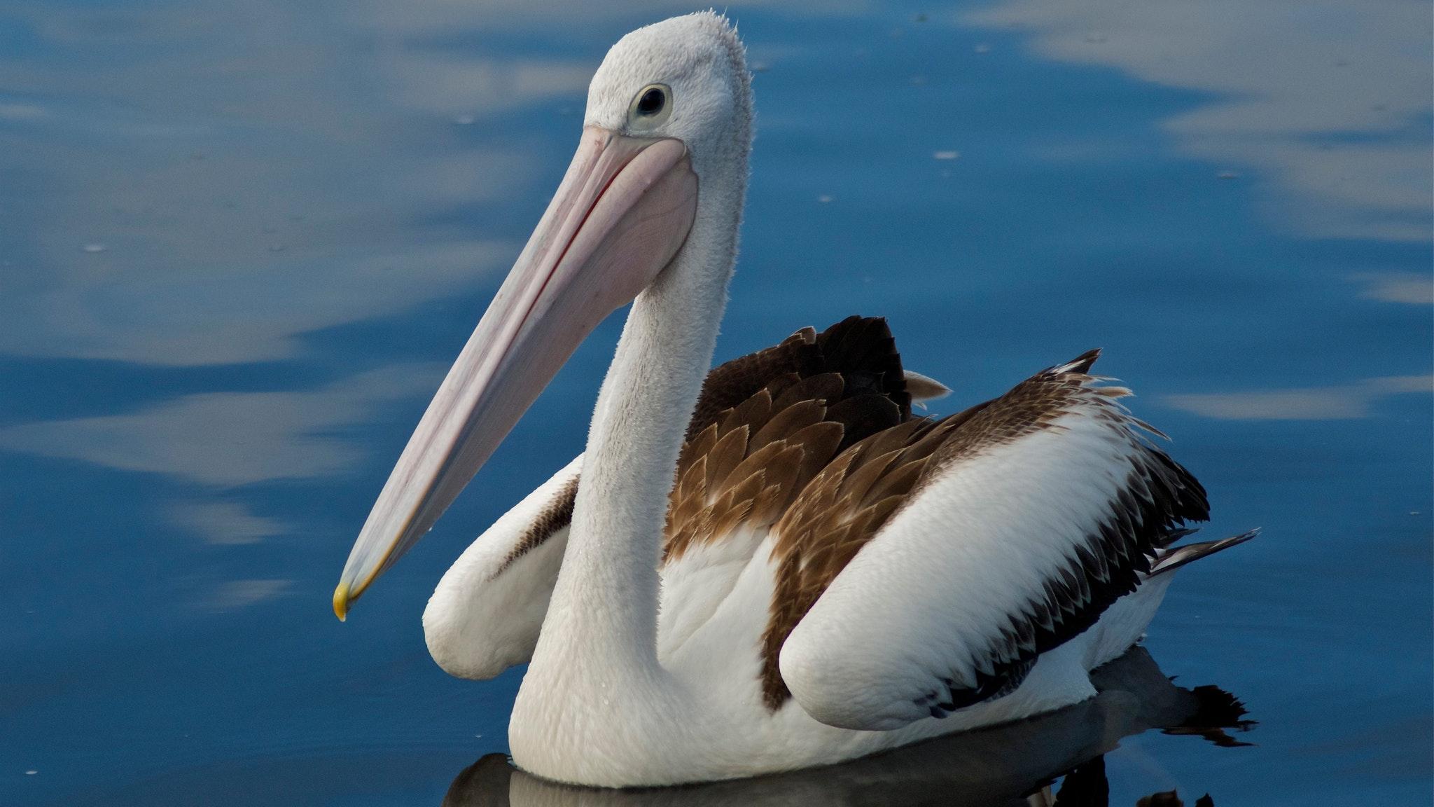 Yaringa Marine National Park