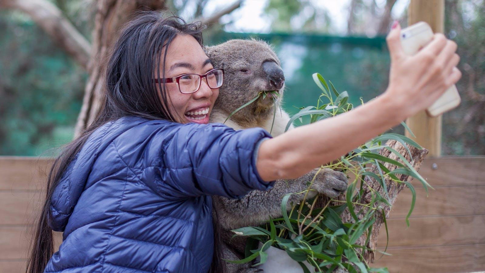Cuddling a koala during the koala encounter at Moonlit Sanctuary