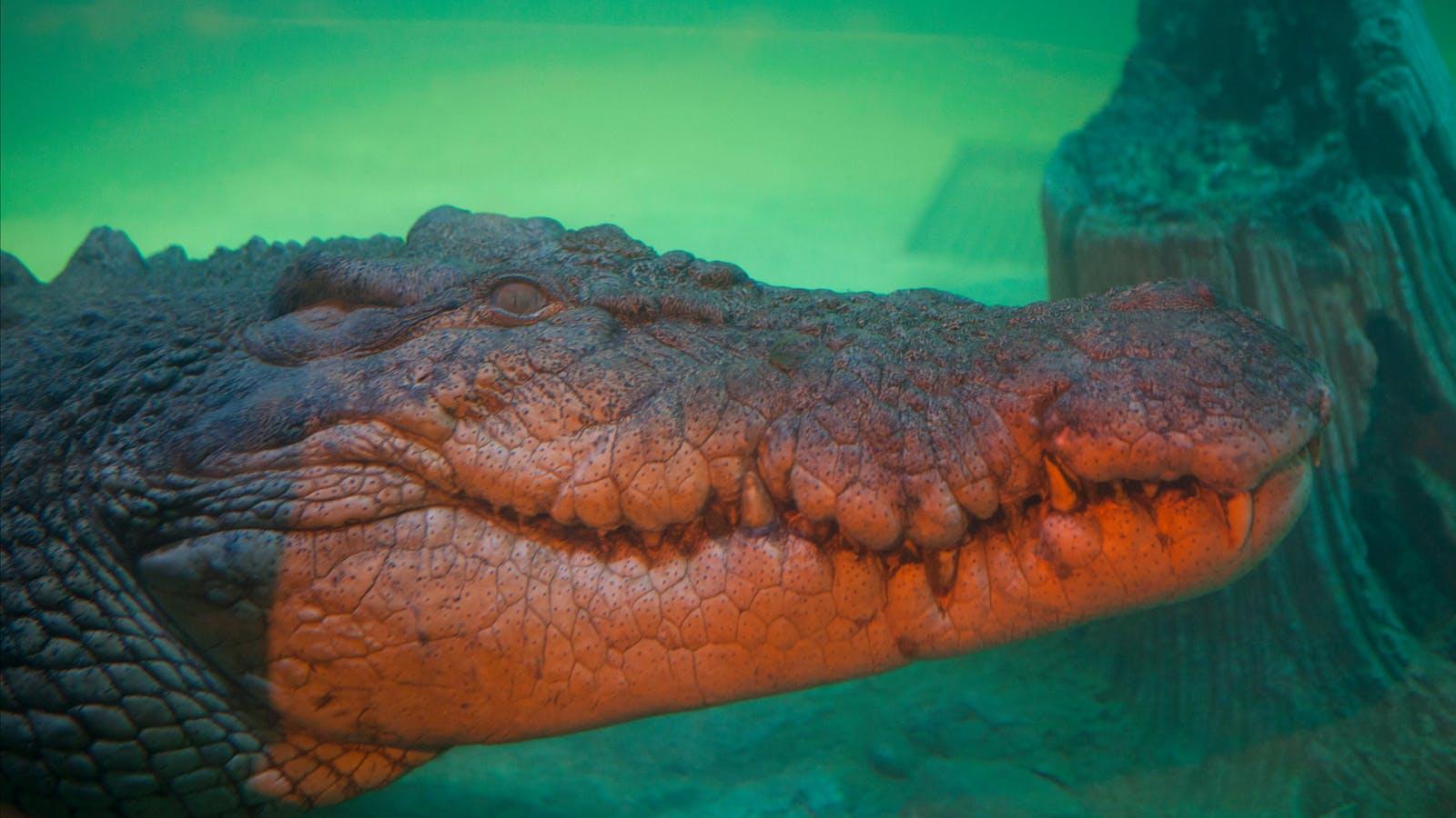 Croc Lair