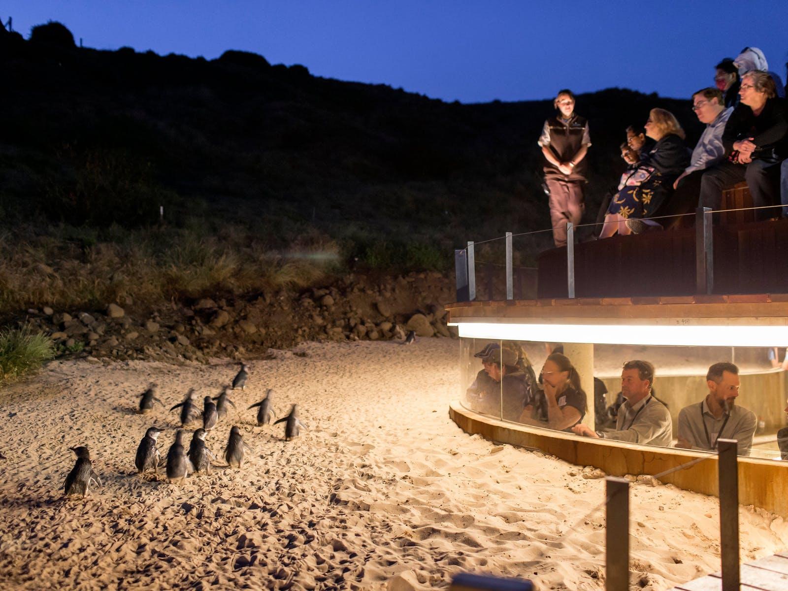 Penguin Parade Phillip Island Luxury Private Tour Express