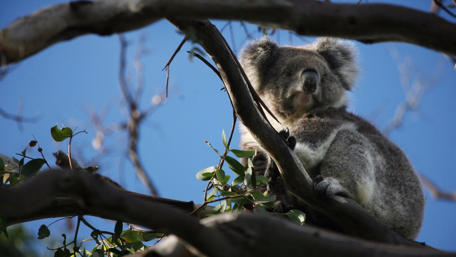 Great Ocean Road Koala Private Luxury
