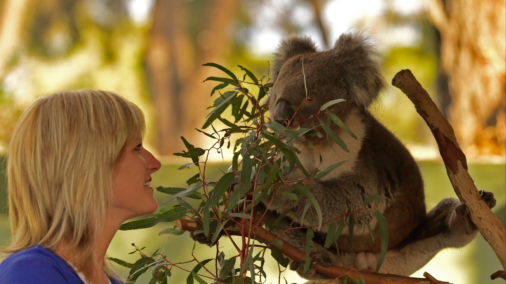 Moonlit Sanctuary Phillip Island Wildlife Luxury Private Tour
