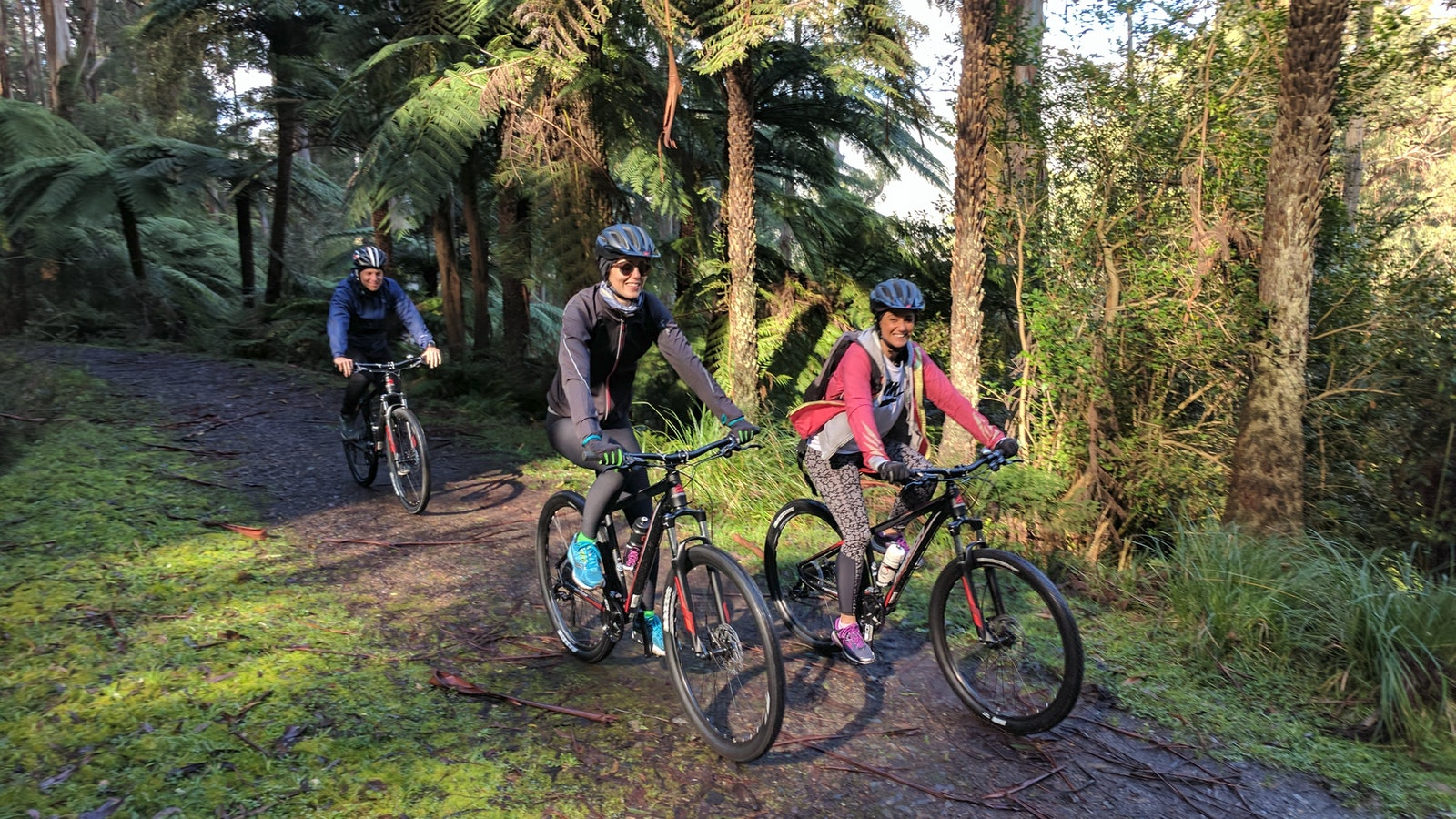 Yarra Valley rainforest riding