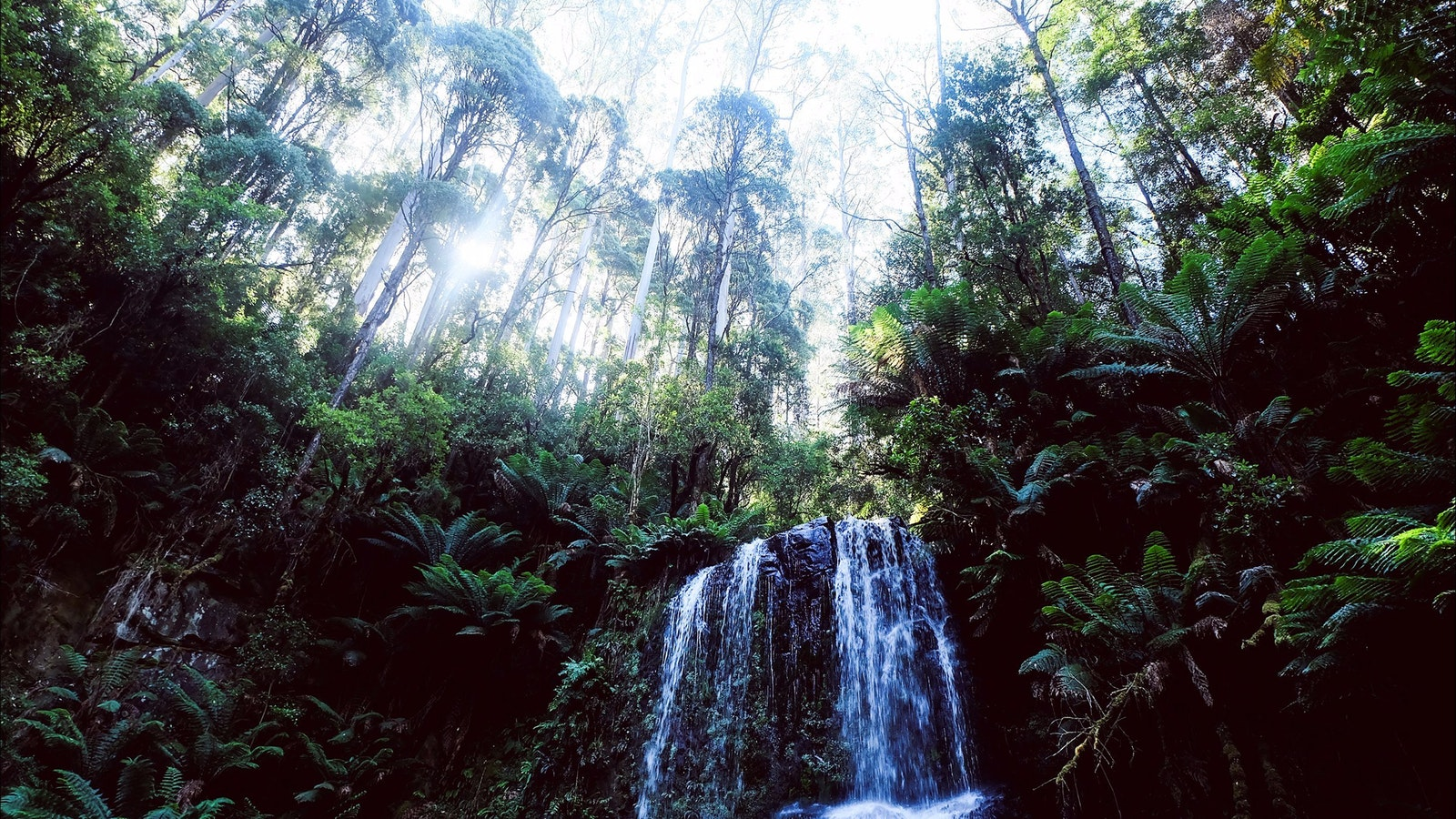 Great Otway National Park - Day Hiking Tour