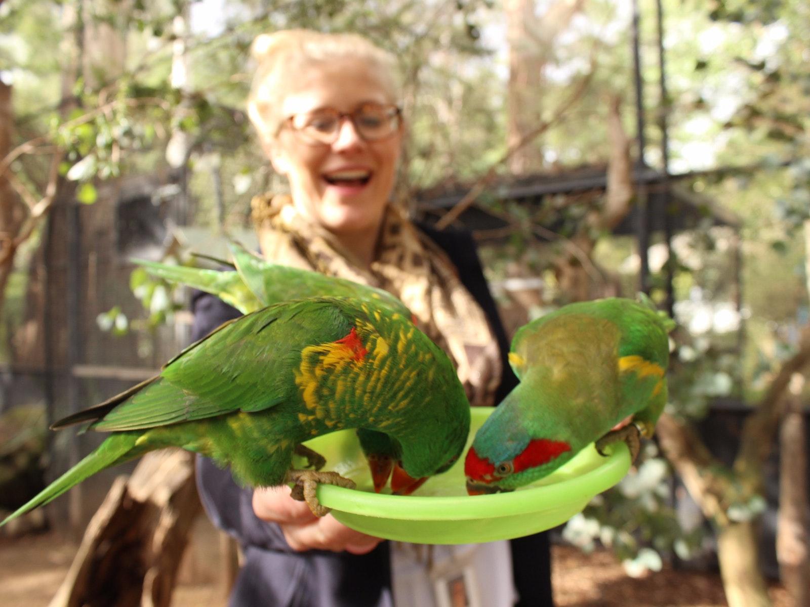 Yarra Valley Wildlife Luxury Private Tour Healesville Sanctuary