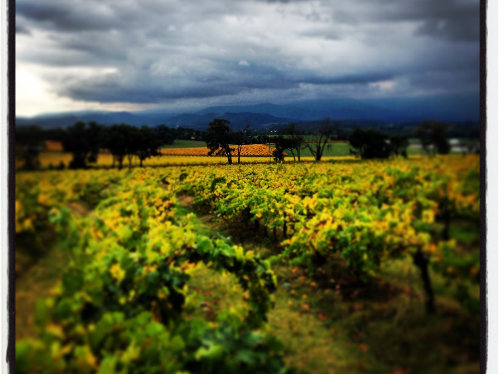 The stunning landscapes of the Yarra Valley.