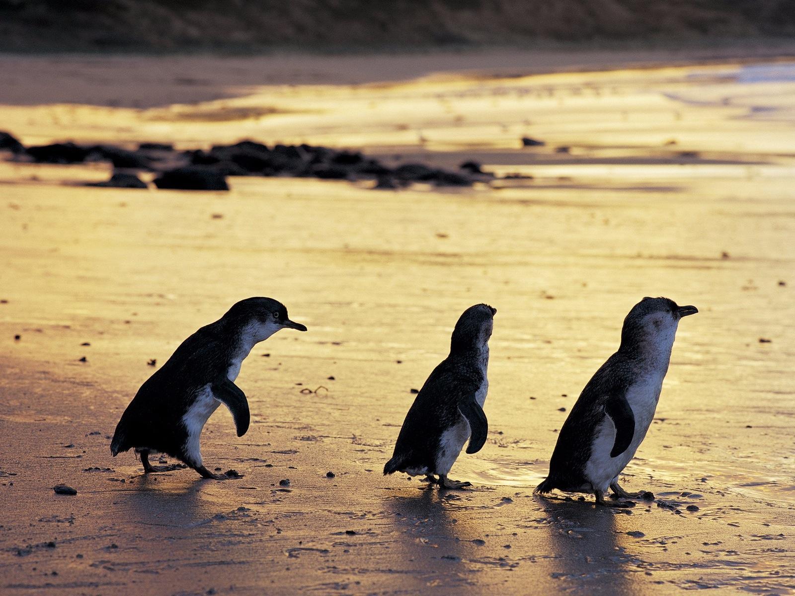 HUMMER Penguin Parade Luxury Escape