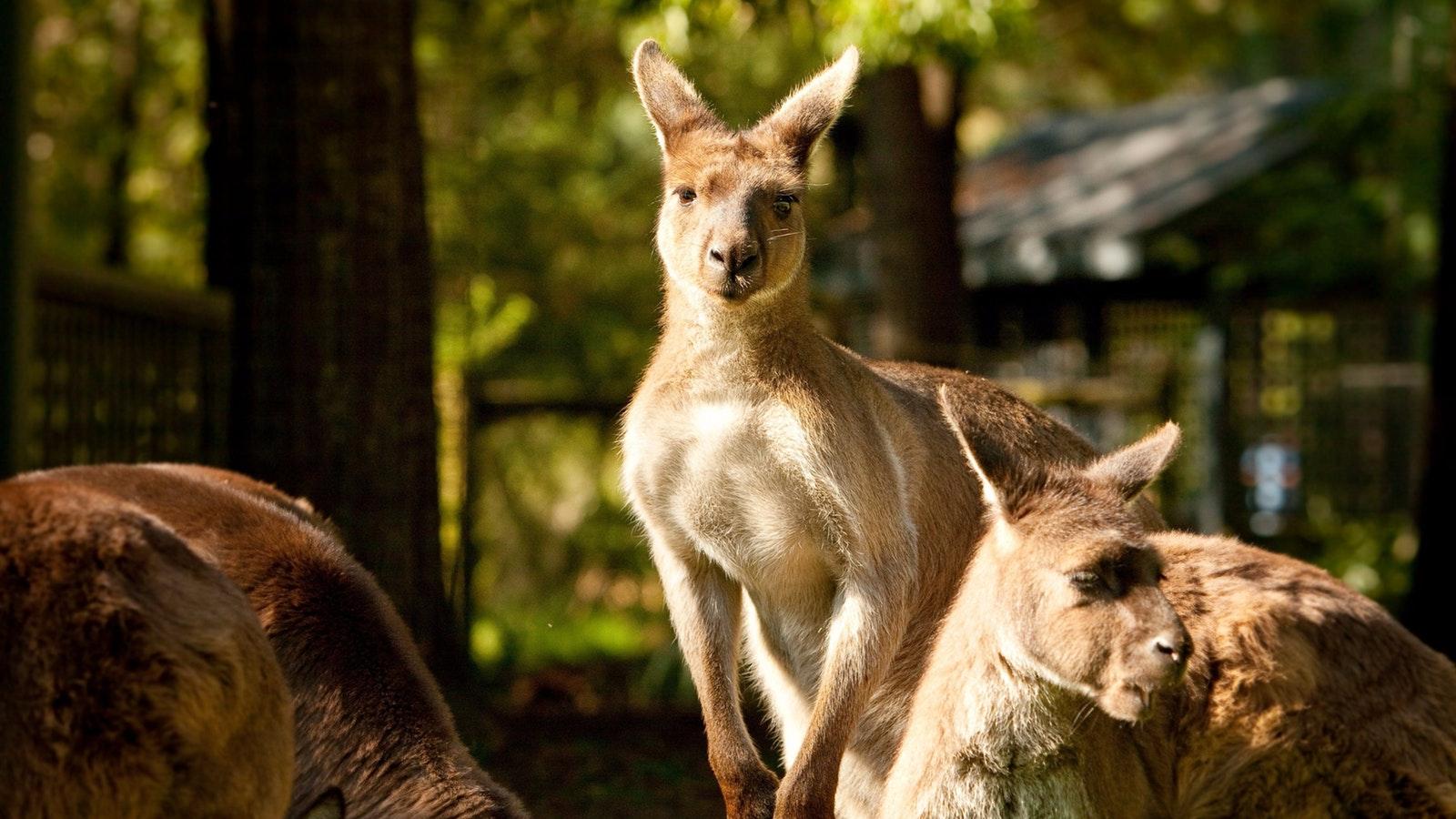 Yarra Valley Wildlife Luxury Private Tour