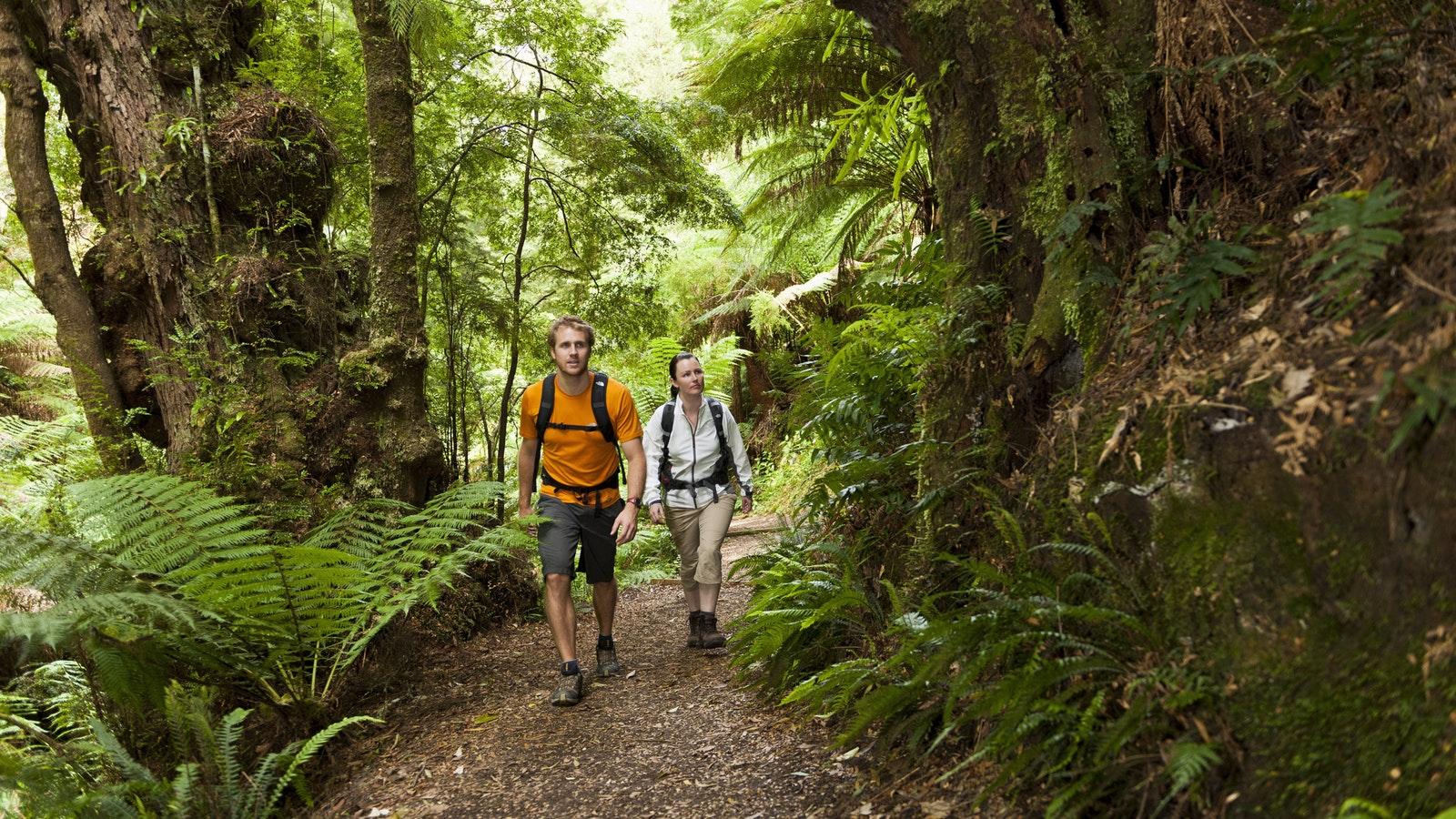 Otway National Park Great Ocean Walk Private Tour