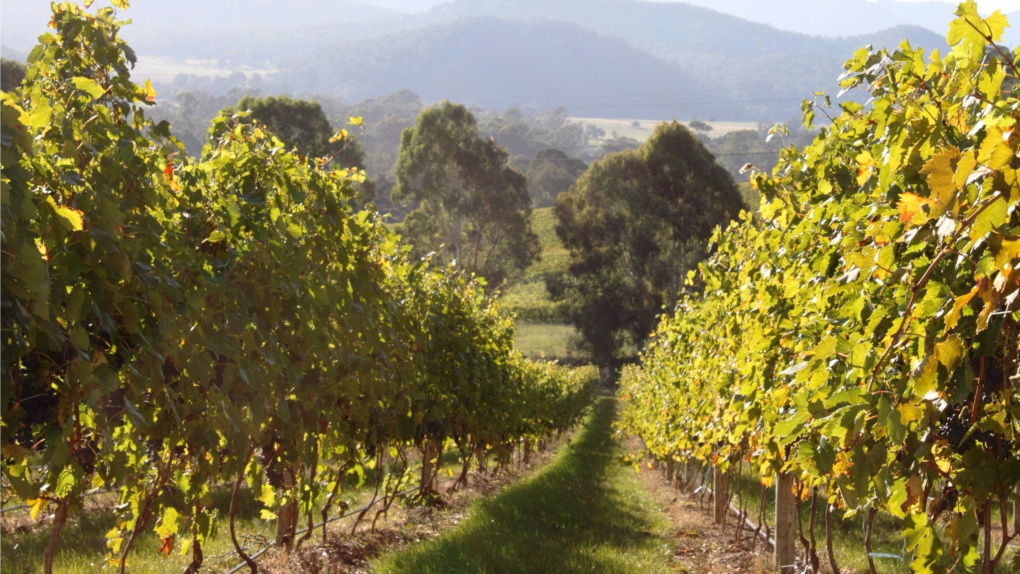 King Valley High Country Private Tour