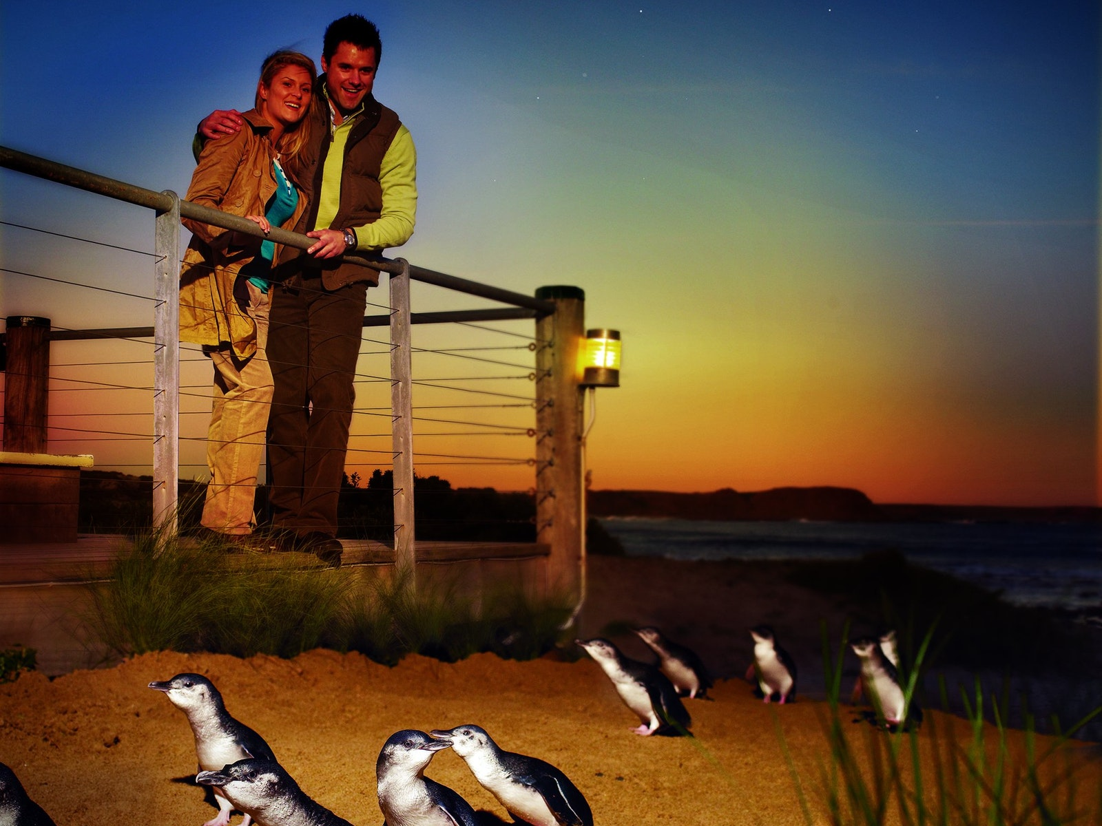 Watching the Penguins arrive at sunset at Phillip Island Nature Parks Visitor Centre