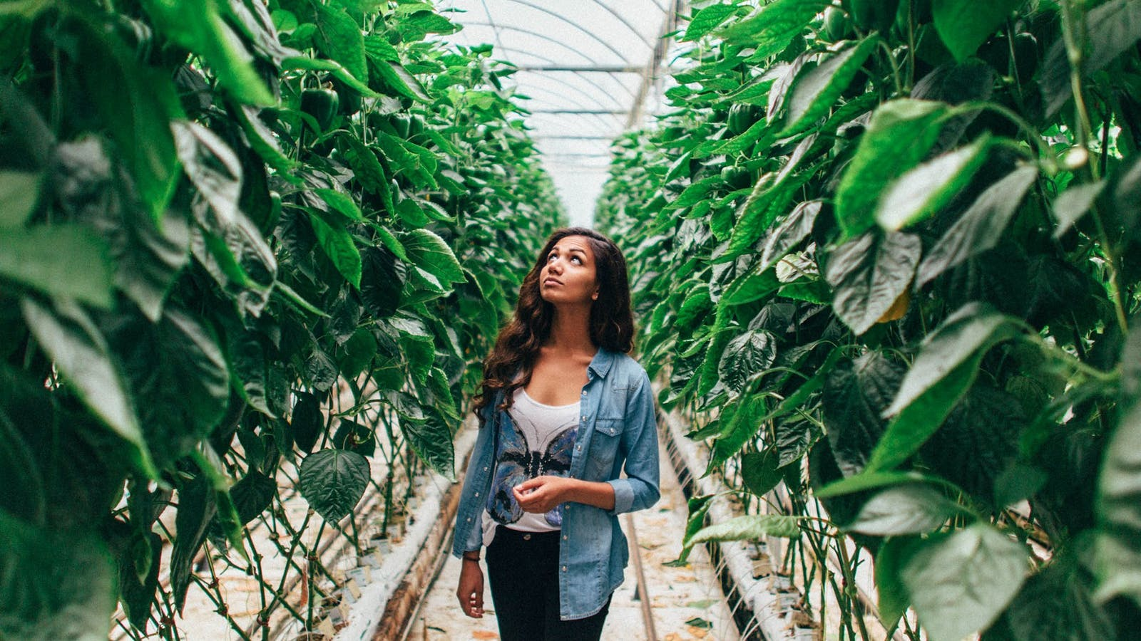 Gateway Estate operates a Hydroponic Greenhouse with Capsicums