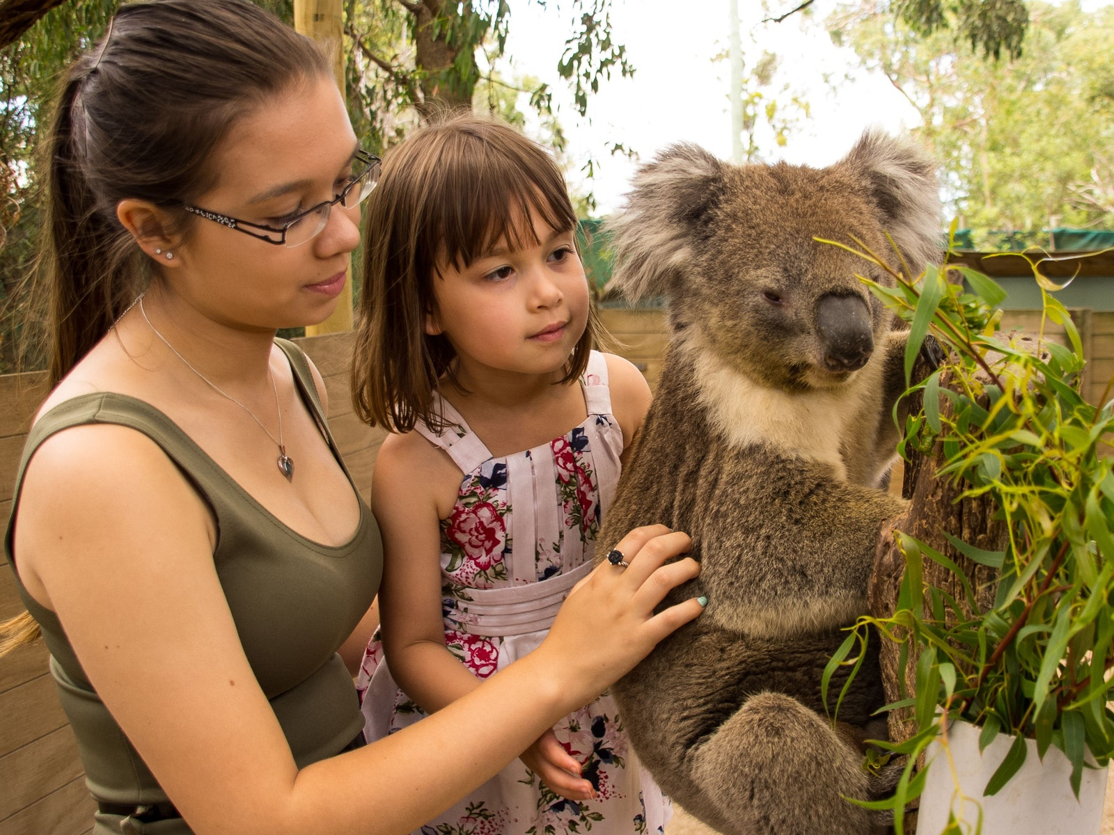 Opportunity to touch a Koala at Moonlit Sanctuary