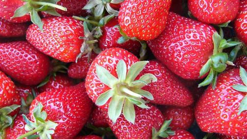 Strawberries - Sunny Ridge Strawberry Farm