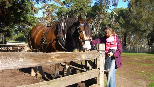 Horses - Churchill Island Farm