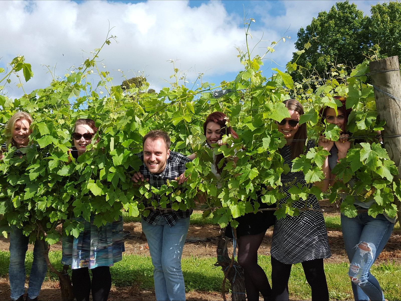 Grampians Wine Tour