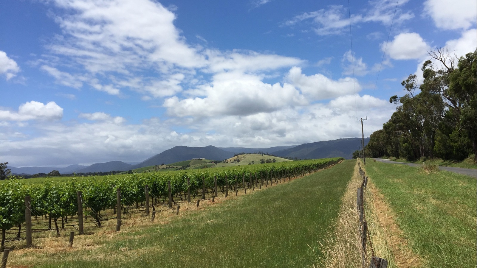 Green vines, hills and blue skies with patchy cloud in the Yarra Valley