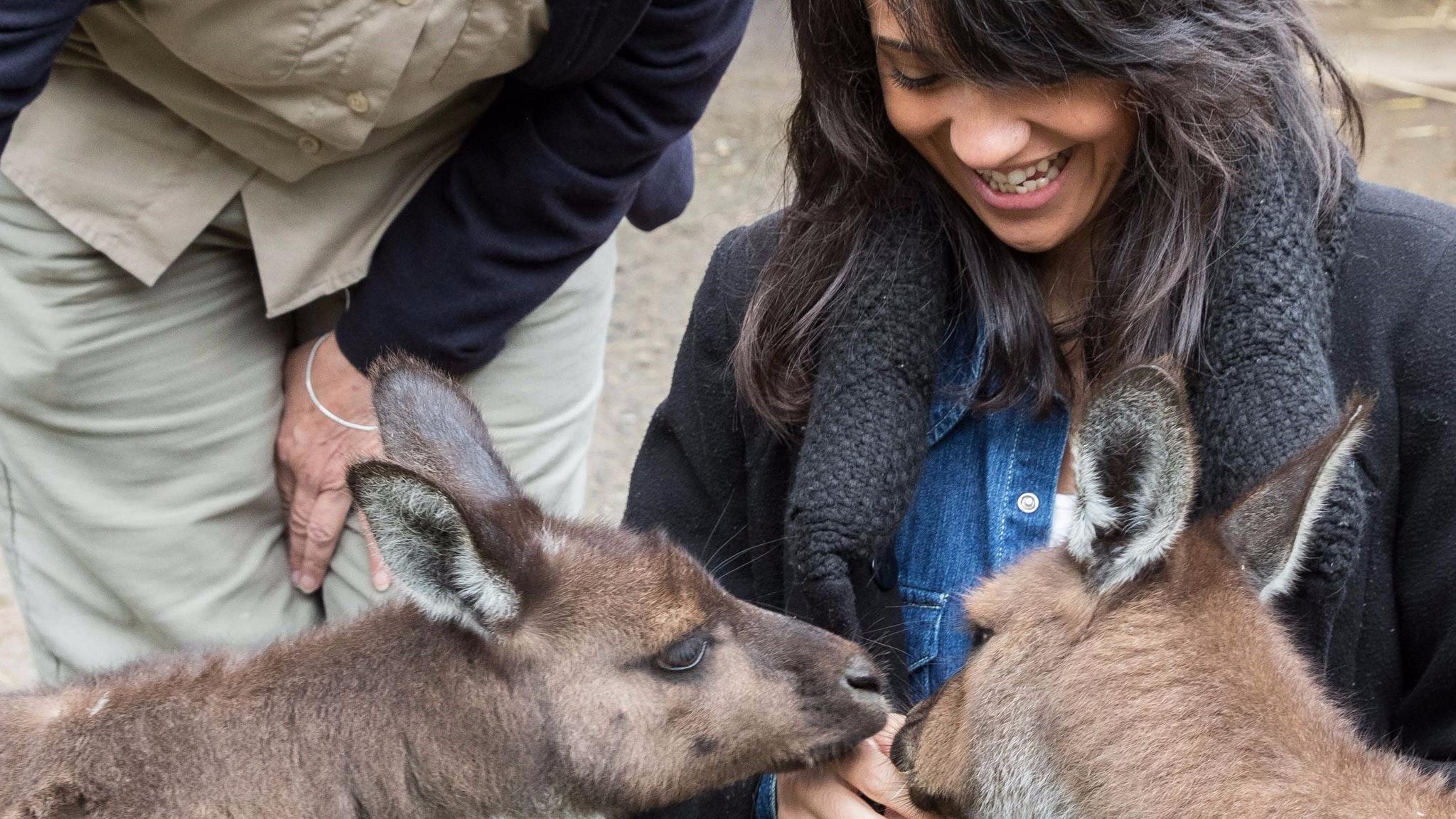 Feeding kangaroos at Healesville Sanctuary with Oceania Tours