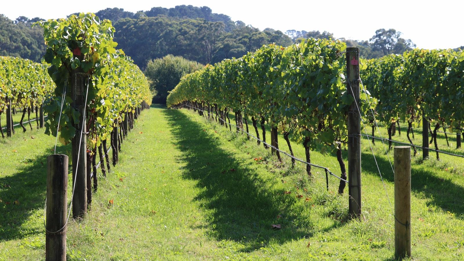 Mornington Peninsula Private Winery Tou