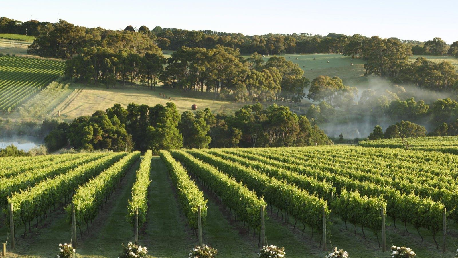 Mornington Peninsula Vineyard