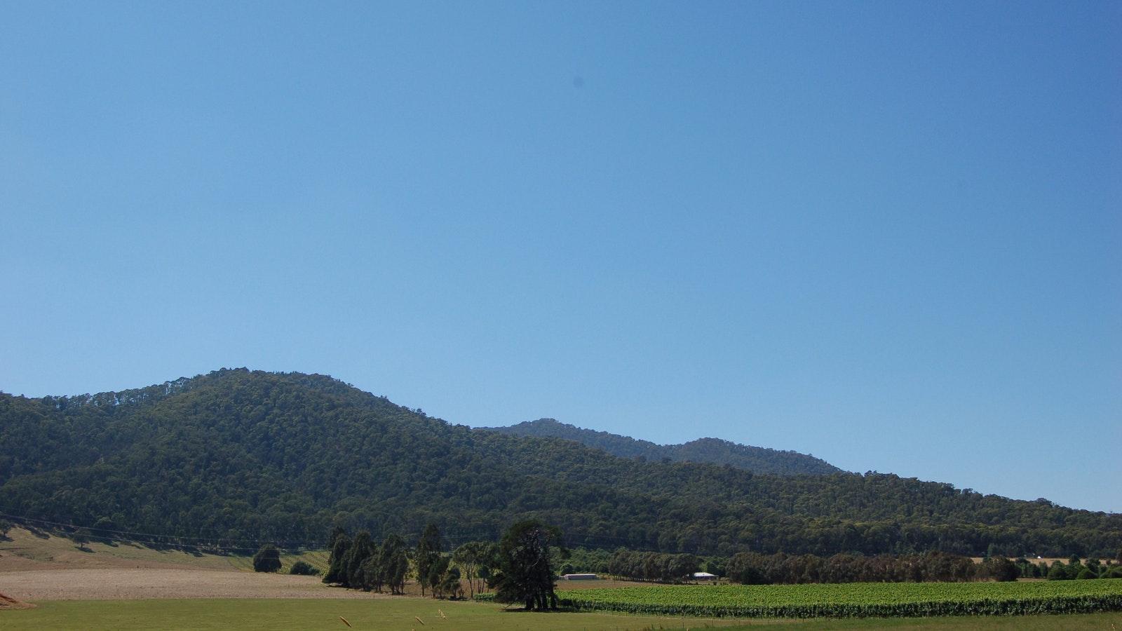 King Valley Vineyard