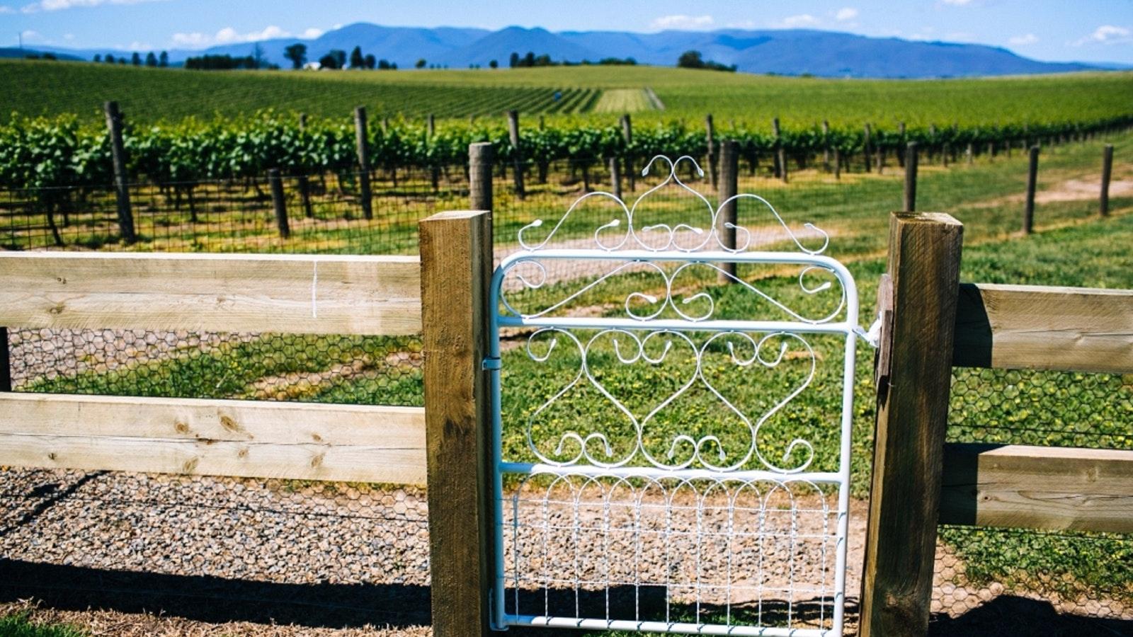 Yarra Valley Vines