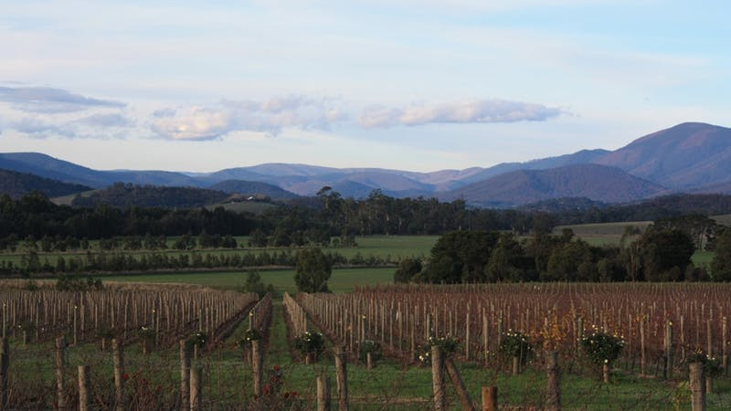Domaine Chandon Vineyard Views
