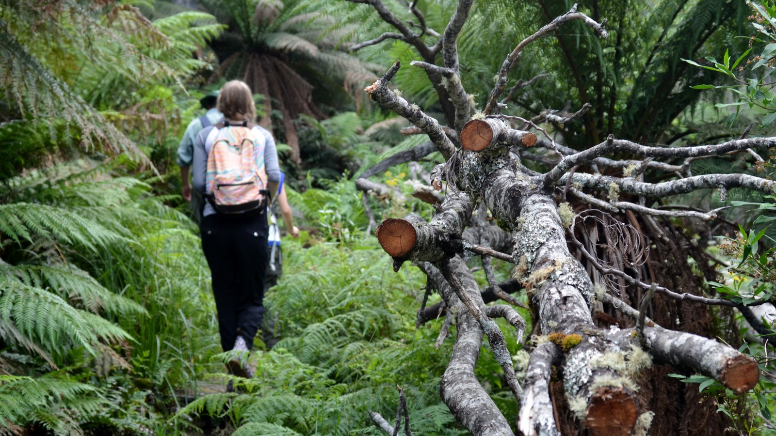 Walk in Baw Baw National Park
