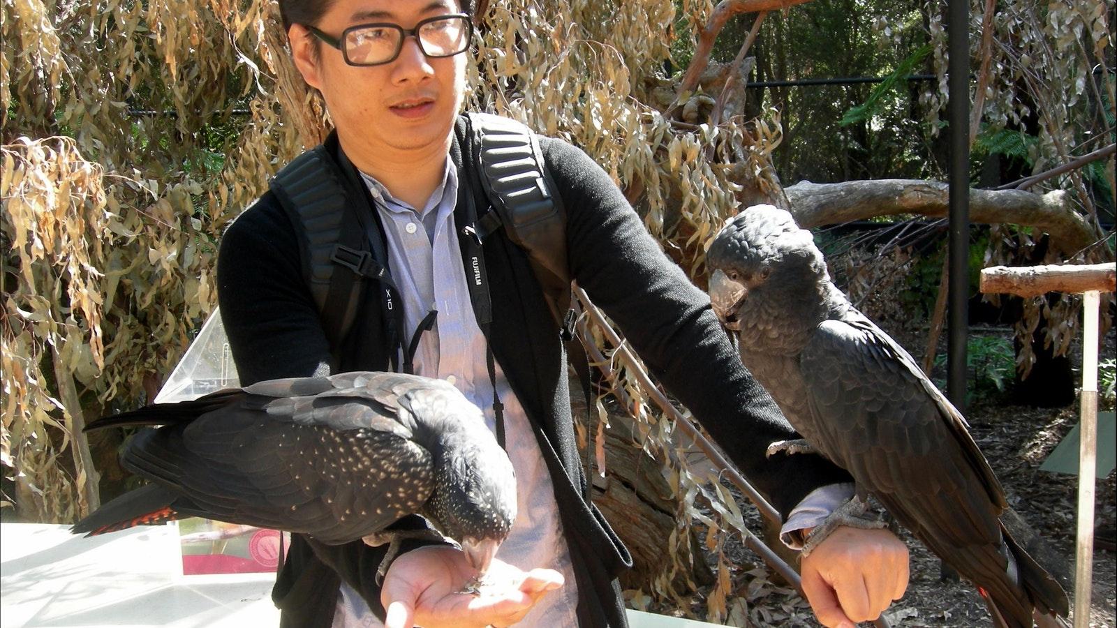 Birds at Healesville Sanctuary