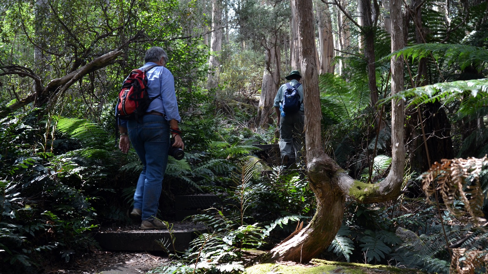 Mt Baw Baw National Park
