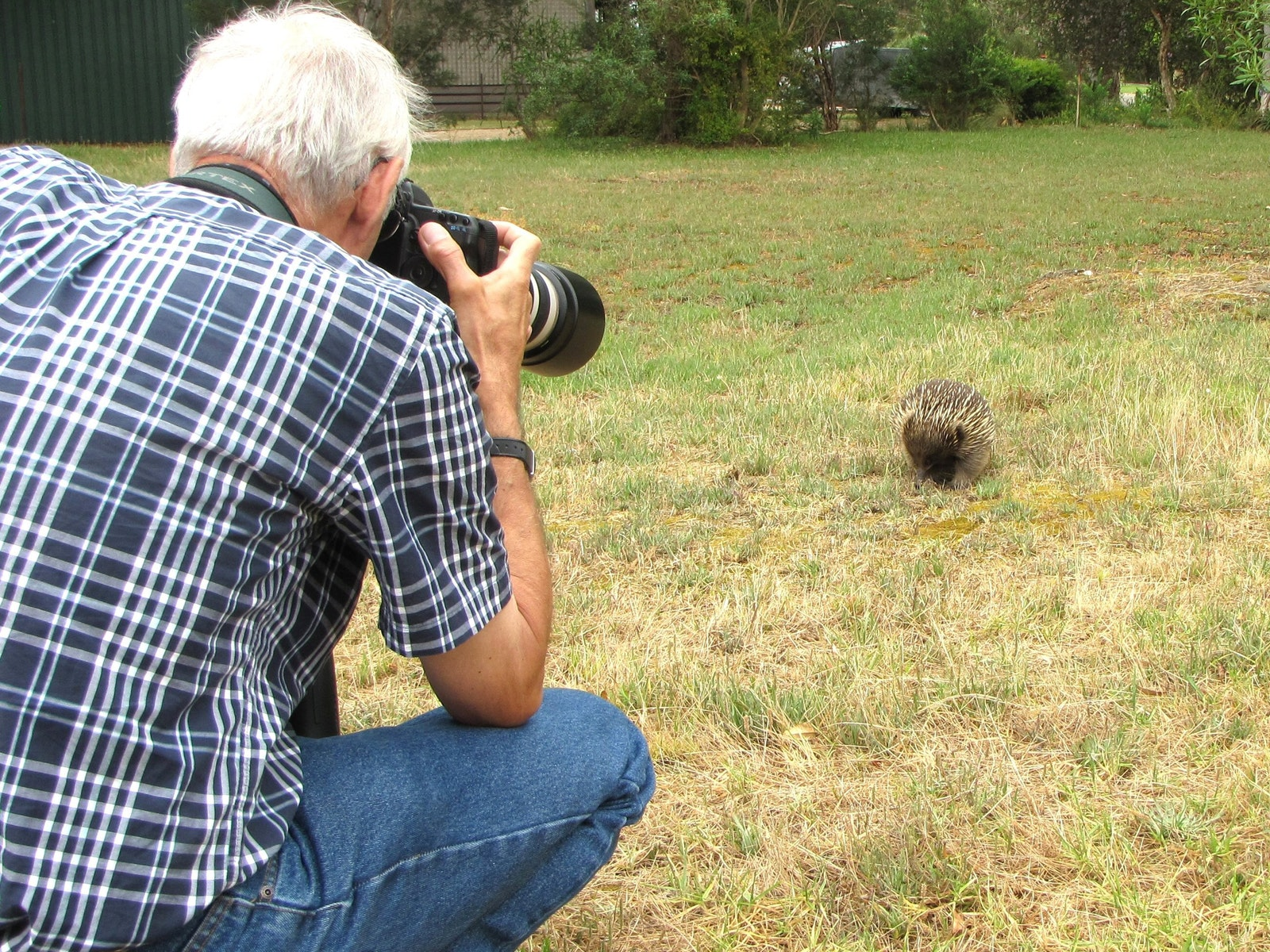 photographing a wild Echidna