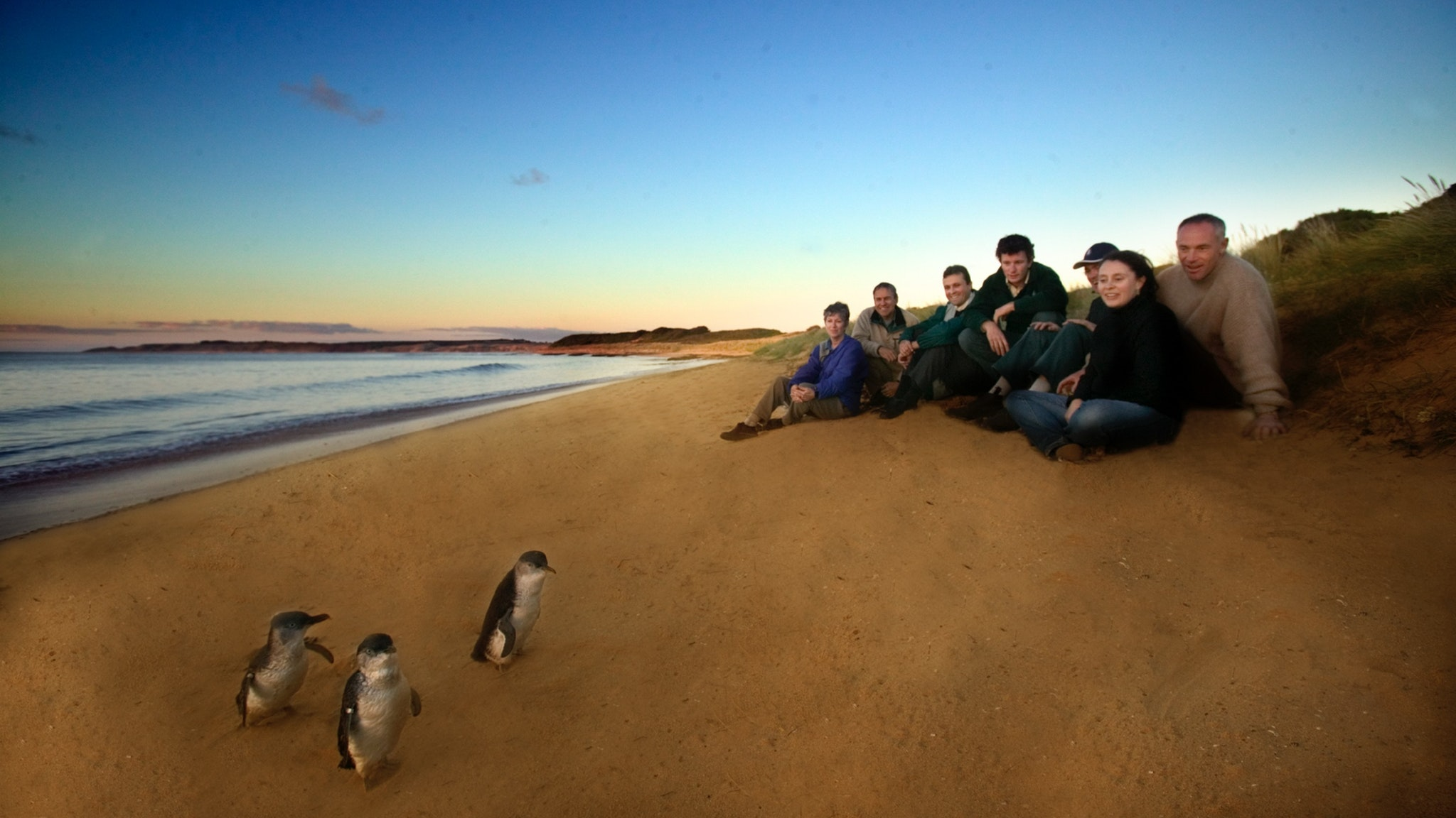 Ultimate Experience at Penguin Parade