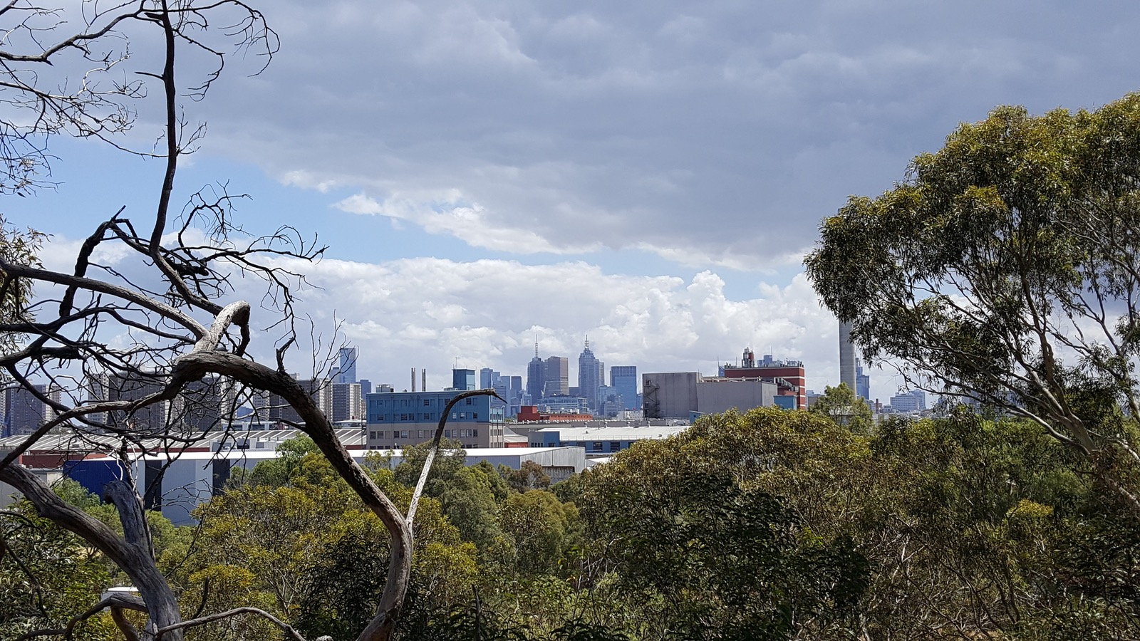 View of the CBD from the Yarra trail