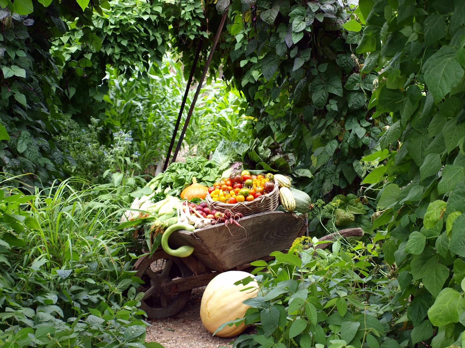 Wheelbarrow full of produce
