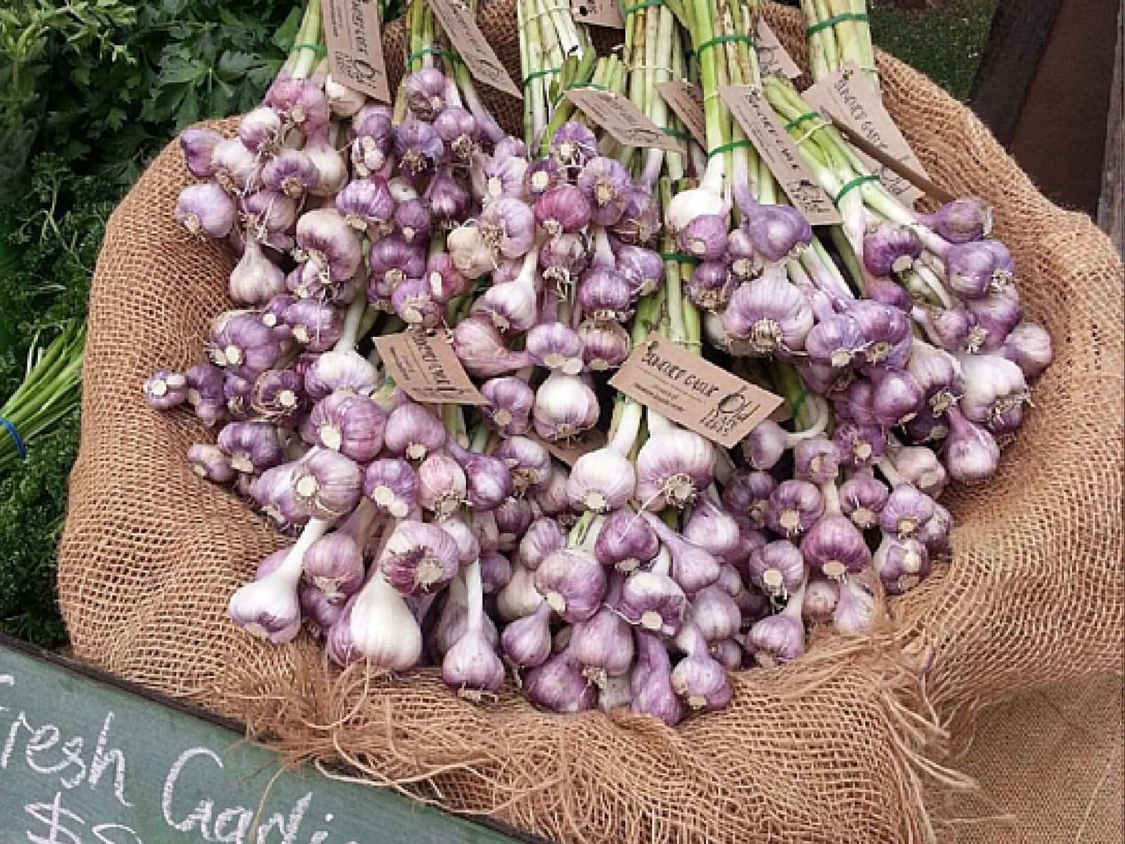 Fresh produce, these garlic bulbs are from Old Tyabb Herbs stall - Red Hill Community Market