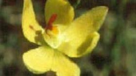 Langwarrin Flora and Fauna Reserve