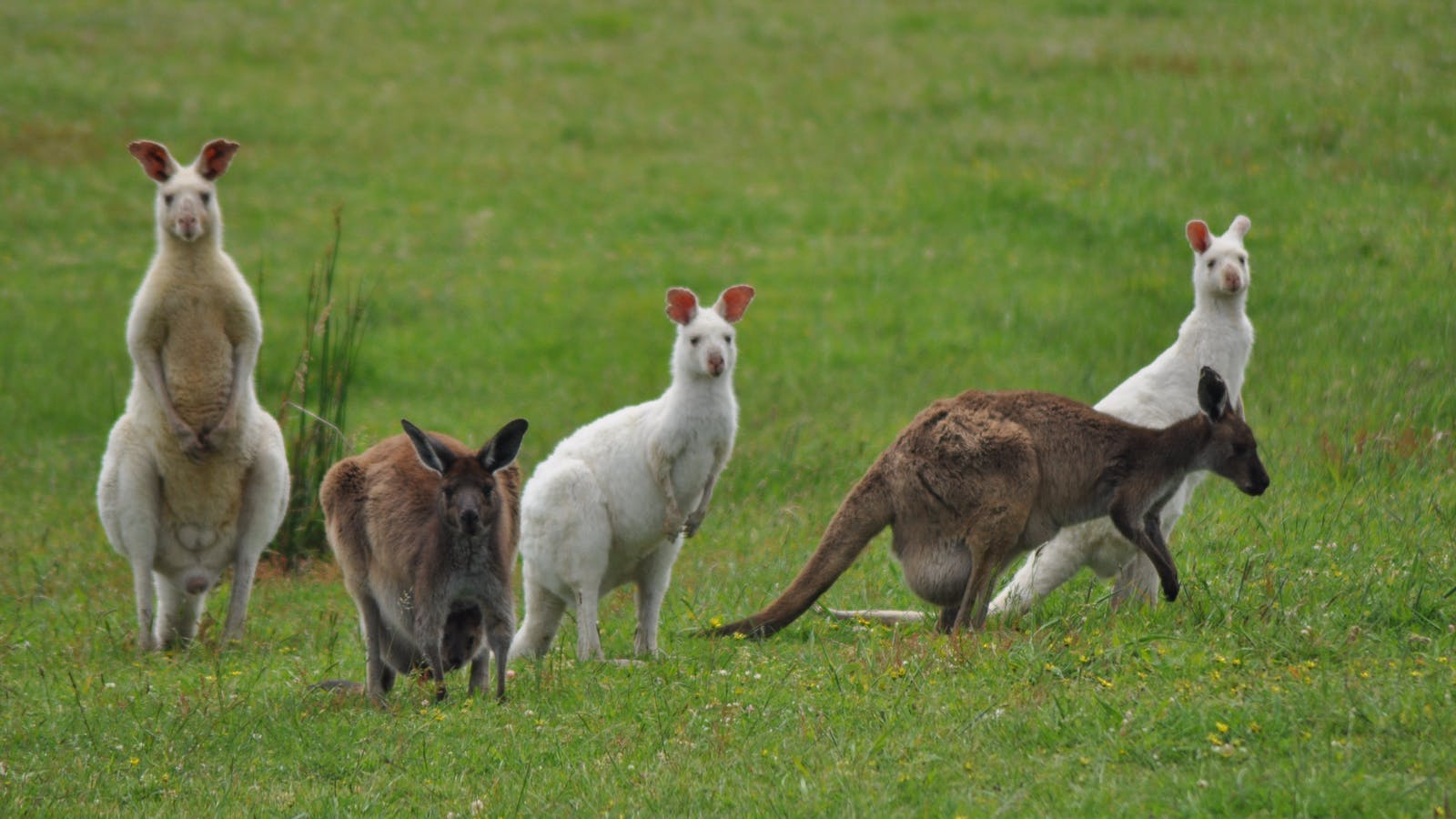 Some of our kangaroos.