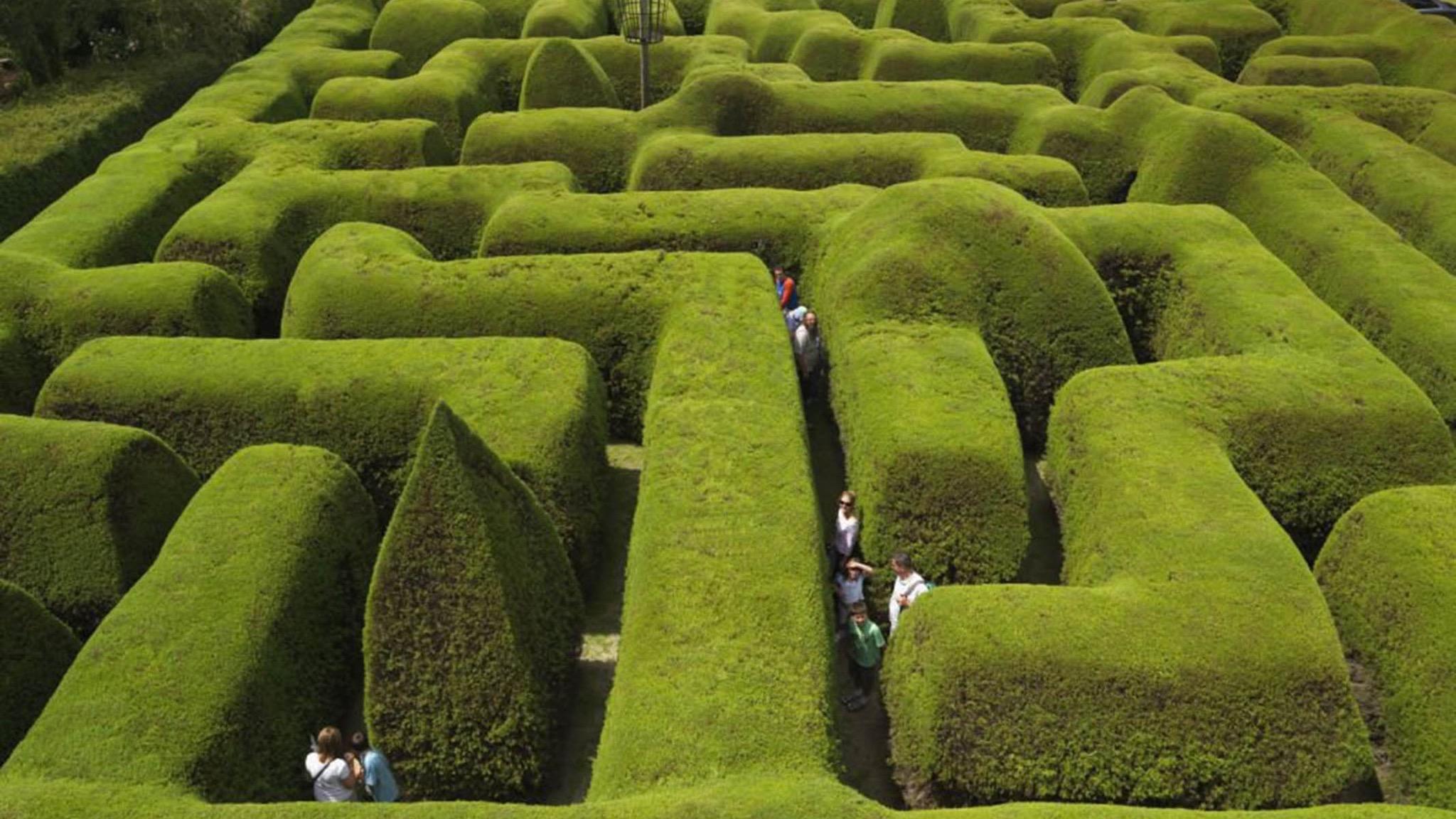 ashcombe maze and lavender gardens attraction mornington peninsula