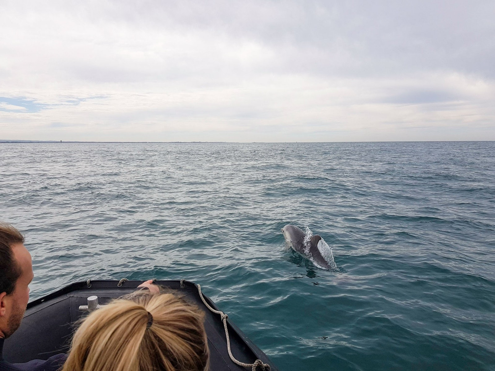 See wild dolphins on tour