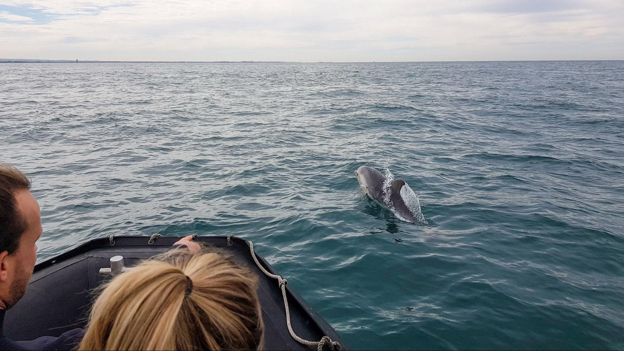 See wild dolphins on tour