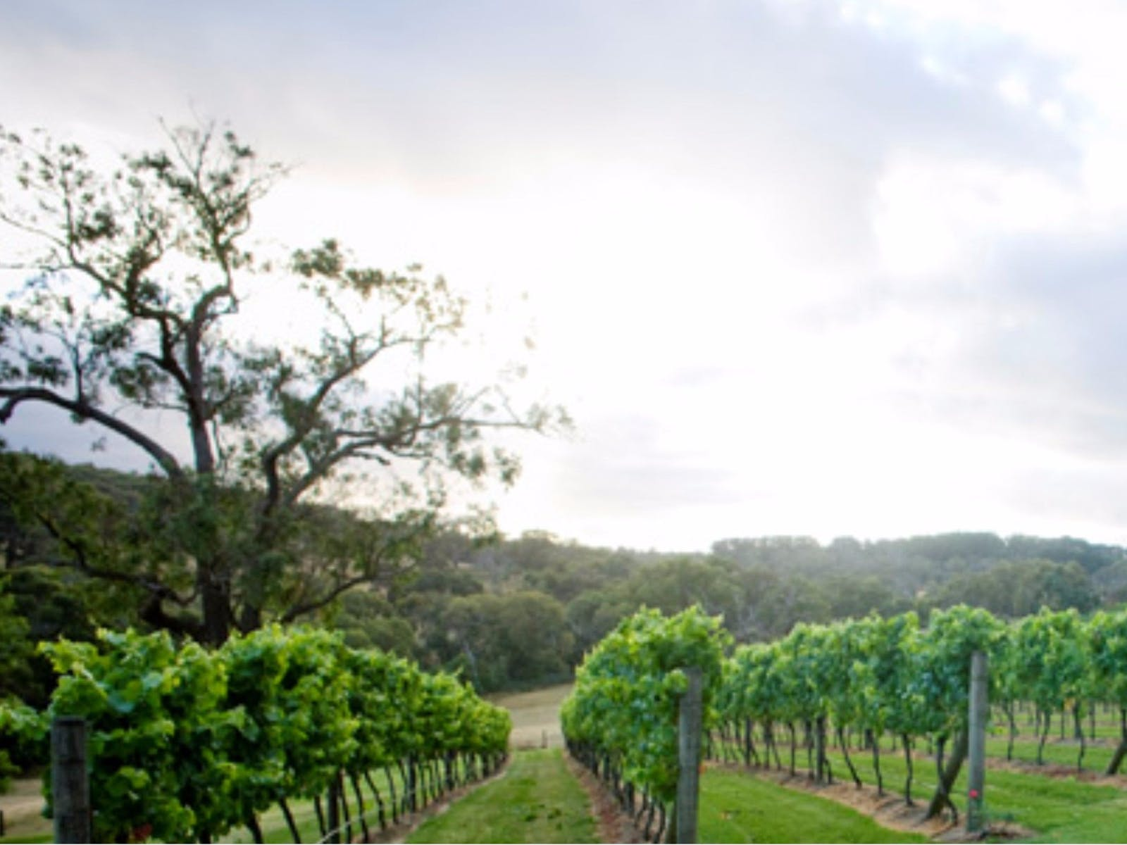 Elgee Park vineyard, where it all started