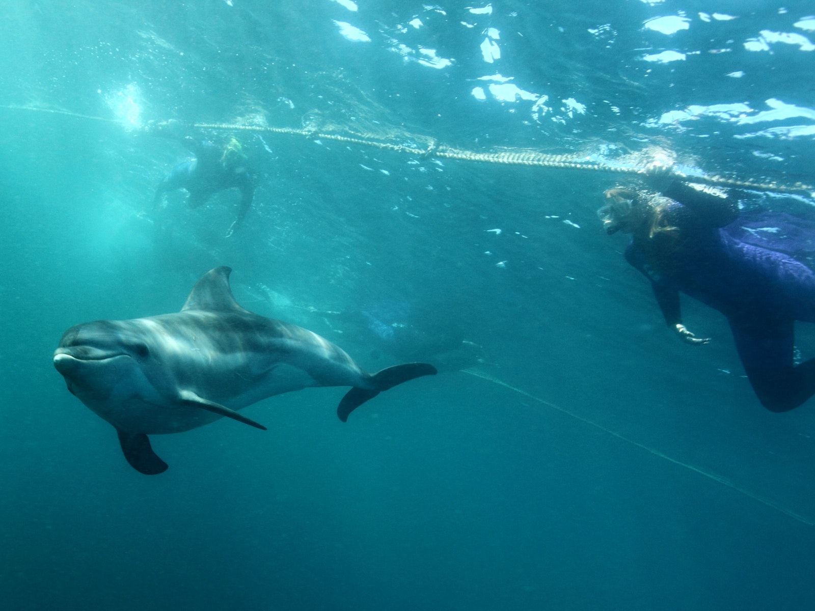Swimmers with dolphins