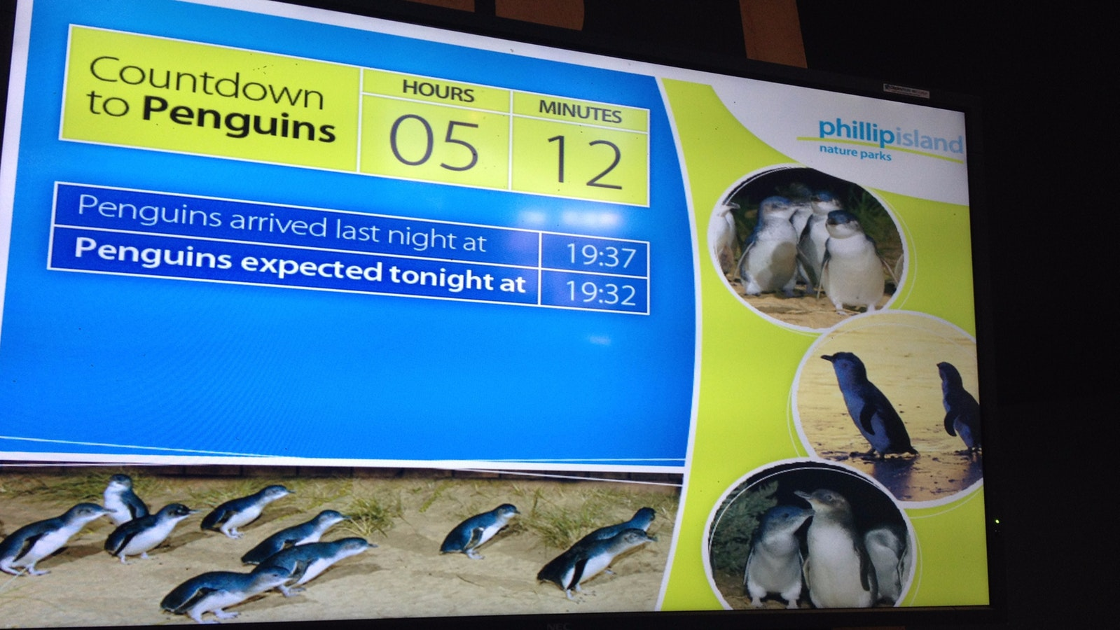 Screen at penguin centre showing countdown to the penguin parade